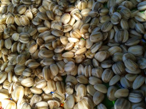 2013 06-27 Seeds - Wed